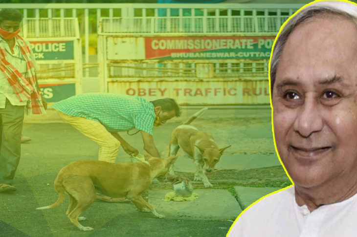 Odisha CM sanctions Rs 55L to feed stray animals during lockdown